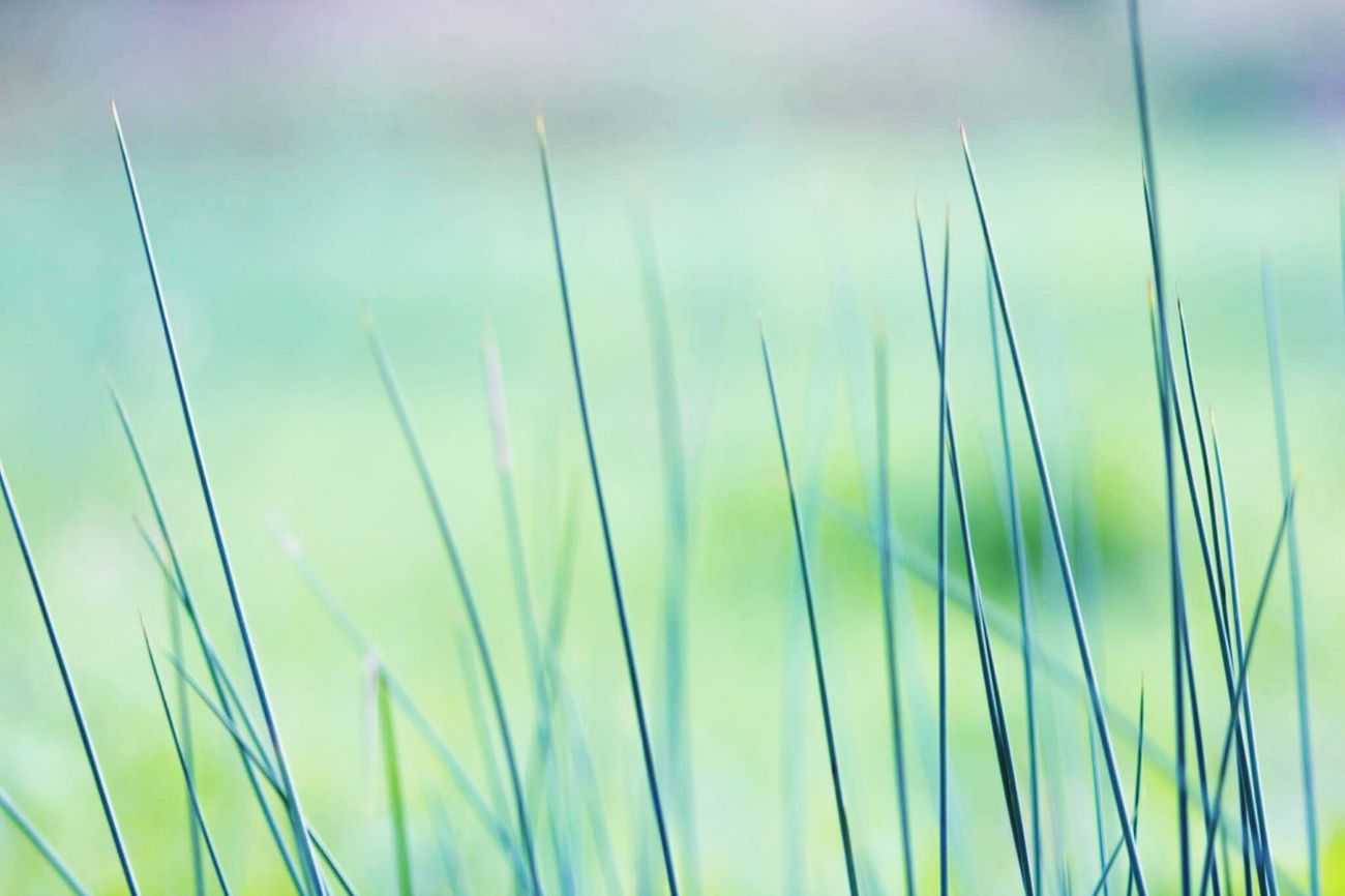 🌱 Green Green Color Green Grass Green Nature Nature_collection Nature Photography Nature_perfection Naturelovers Morning Walk Canonphotography Love Photography Colorful EyeEm Gallery EyeEm Nature Lover EyeEm Best Shots EyeEm Masterclass Eye4photography  Light And Shadow Meadows Enyoing Life Taking Photos Hello World Perfection Meadowlands Nature Porn