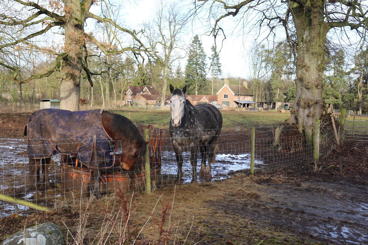 Animal Themes Domestic Animals Mammal Tree No People Nature Horse Livestock Grass Built Structure Bare Tree Day Outdoors Sky Beauty In Nature Architecture Water Horses Wildlife & Nature Horse Photography  Horse Life