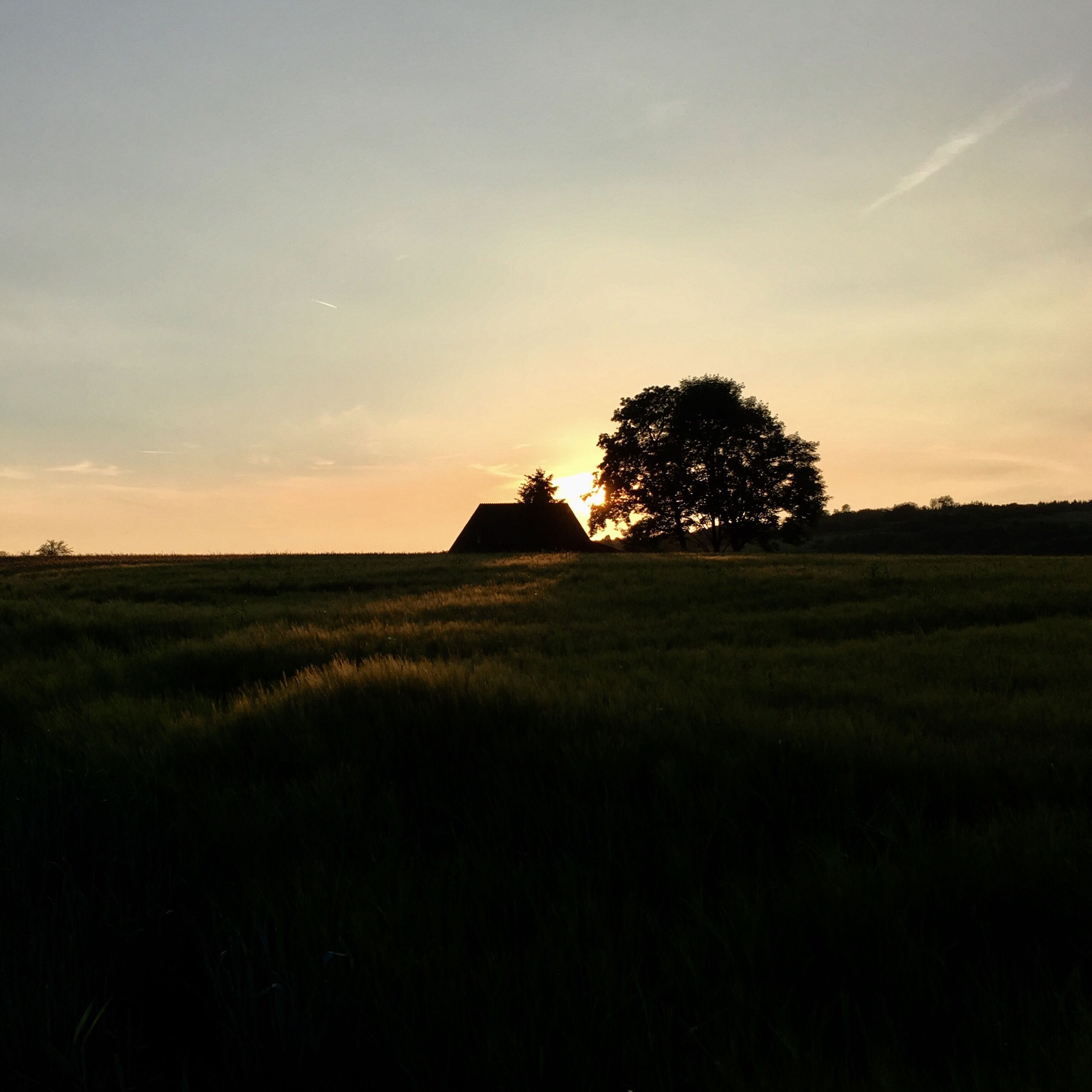 sunset, nature, beauty in nature, field, tree, growth, agriculture, landscape, rural scene, silhouette, sky, scenics, outdoors, no people, day