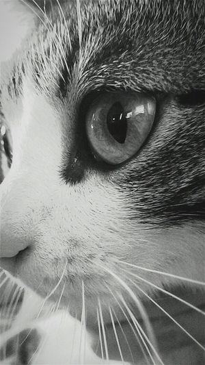 Cat💞 Cat Love Relaxing
