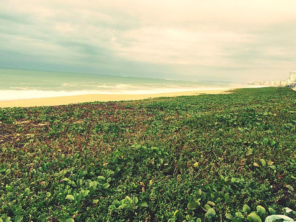 Beach Macaé Clouds And Sky Restinga Vegetation