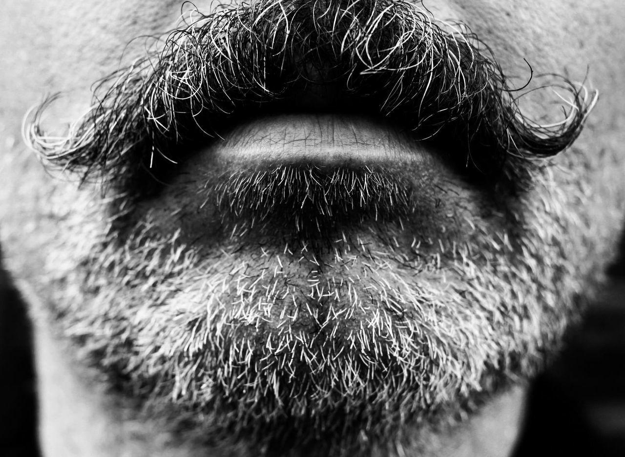 Beautiful stock photos of schnurrbart, Beard, Close-Up, Day, Focus On Foreground