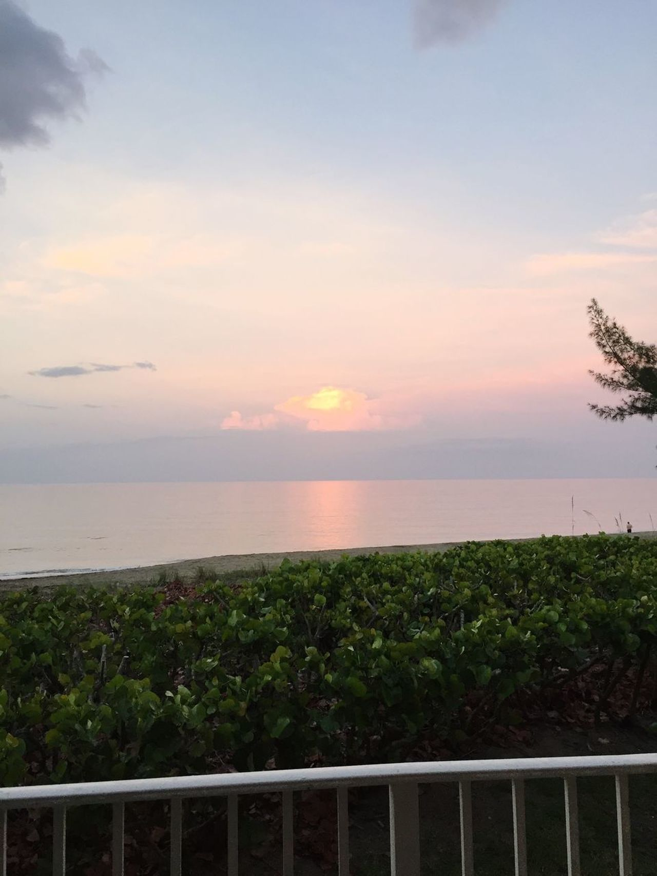 Nature Sky Scenics Tranquility Sunset Beauty In Nature Sea Tranquil Scene Growth Railing No People Horizon Over Water Plant Outdoors Landscape Cloud - Sky Tree Water Day sunset sky water ocean