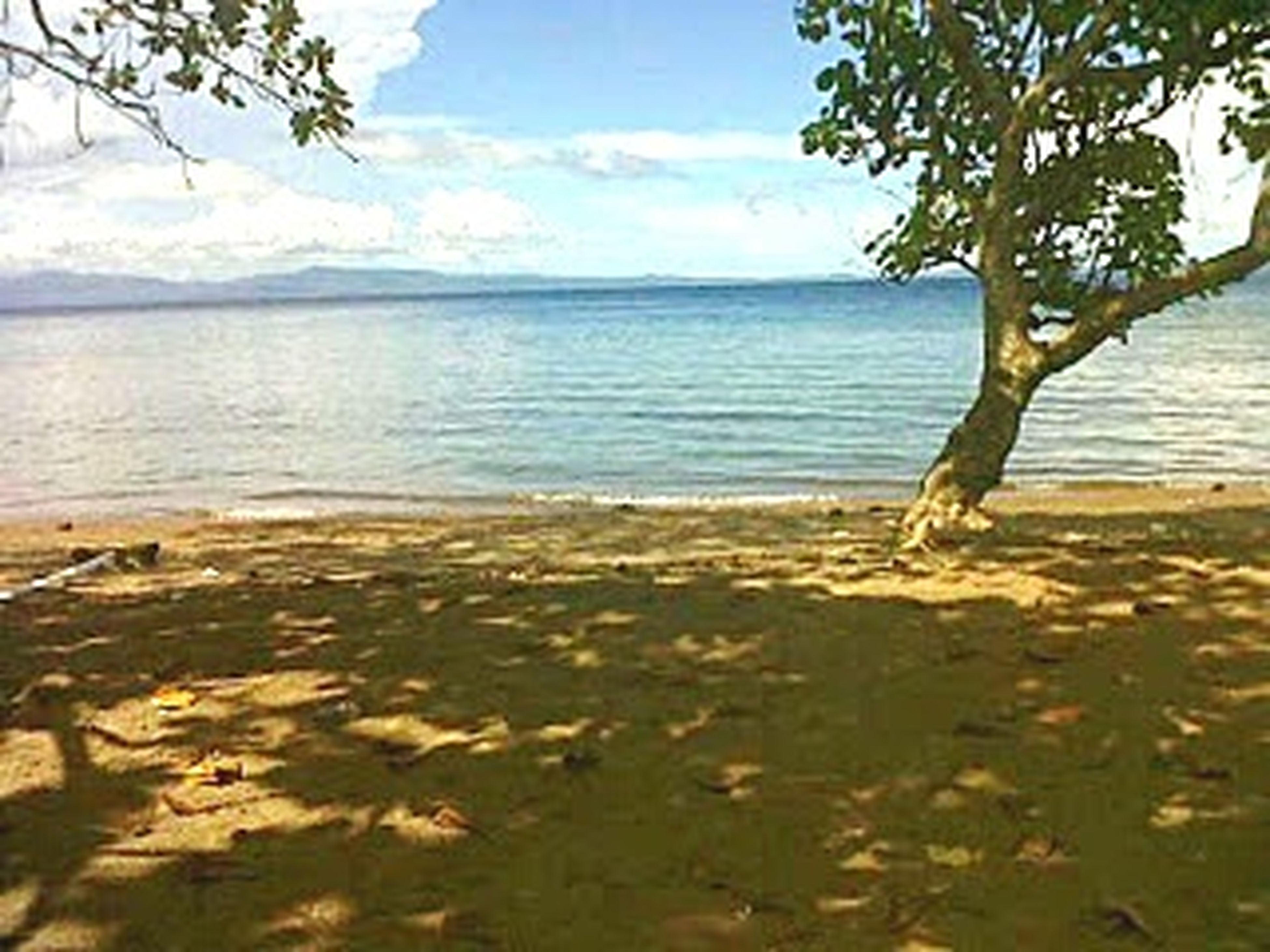 water, tranquil scene, tranquility, scenics, sea, beauty in nature, sky, tree, nature, beach, horizon over water, shore, idyllic, branch, lake, growth, day, calm, sand, outdoors