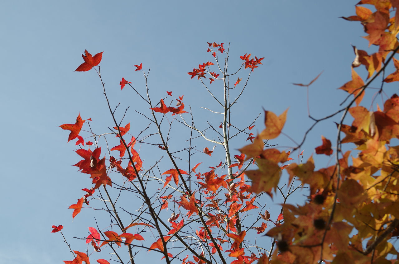 Beauty In Nature Day DSLR Hong Kong Nature No People Pentax Red Leaves Sky Tree