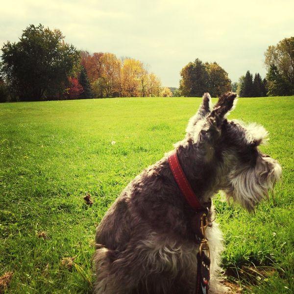 Morning walk Walking Around Autumn Trees Dogs