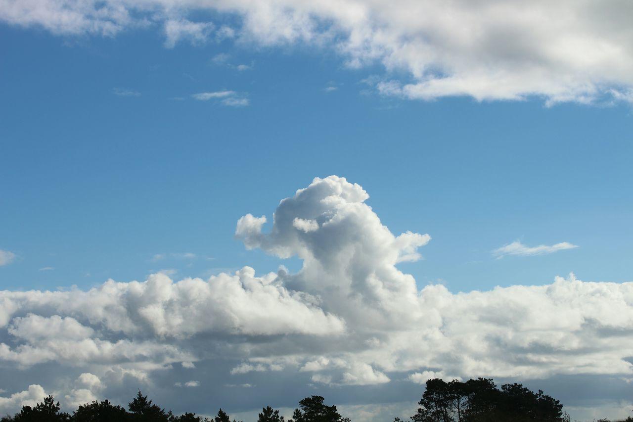 """Das Kind rief """"Mama, ein Elefant!"""" und tatsächlich, da war ein Elefant. Und er konnte sogar fliegen. Elefant Elephant Wolken Wolkenhimmel Wolkenbilder Himmel Sky Clouds Cloud Blue Wave"""