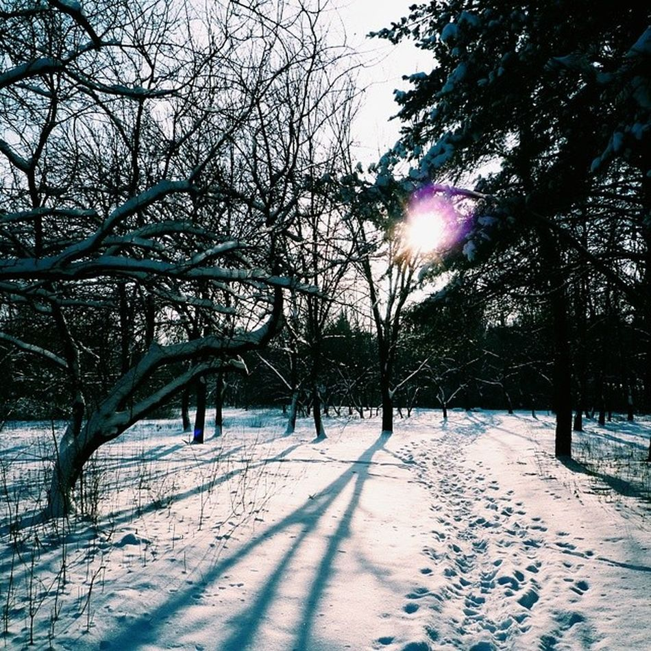 Vscocam Kharkiv Vscoukraine Vscokharkiv vscogram vscolike snowflakes holidayseason nature holidays winter season staywarm cold snowing instawinter blizzard cloudy seasons wintertime snow