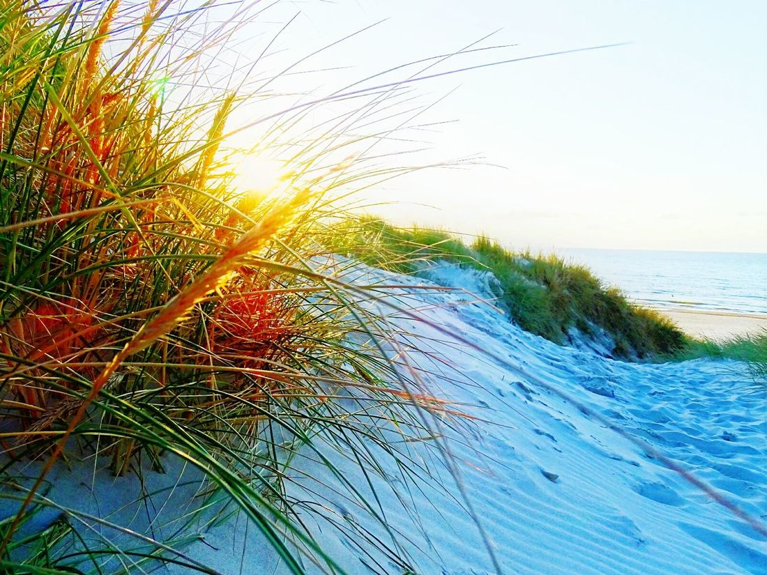 Sea Growth Water Scenics Sun Sunlight Beauty In Nature Tranquility Tranquil Scene Nature Close-up Idyllic Plant Sky Branch Non-urban Scene Blue Day Outdoors Tourism Denmark 🇩🇰 Henne Strand Northern Sea Sand Dune Sand Dunes