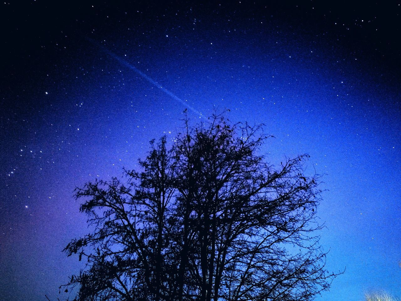 tree, star - space, low angle view, beauty in nature, night, nature, blue, astronomy, no people, tranquility, tranquil scene, sky, outdoors, silhouette, scenics, star field, clear sky, starry, growth, galaxy, branch, space, constellation, contrail