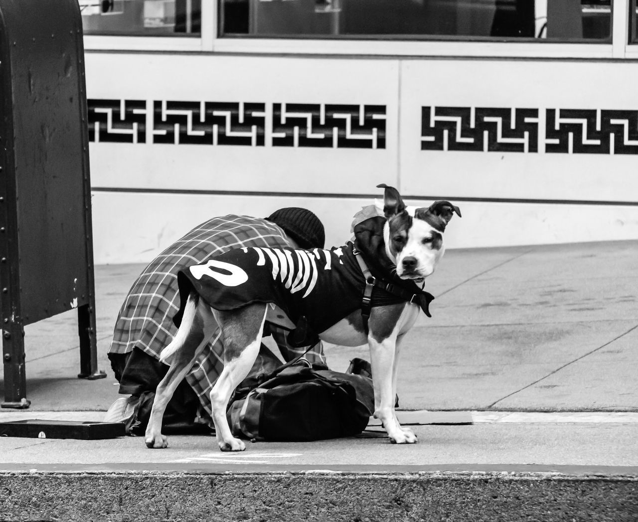 Animal B&w Street Photography Dog Dog Coat Domestic Animals I Love My Dog Looking At Camera Mansbestfriend Togetherness