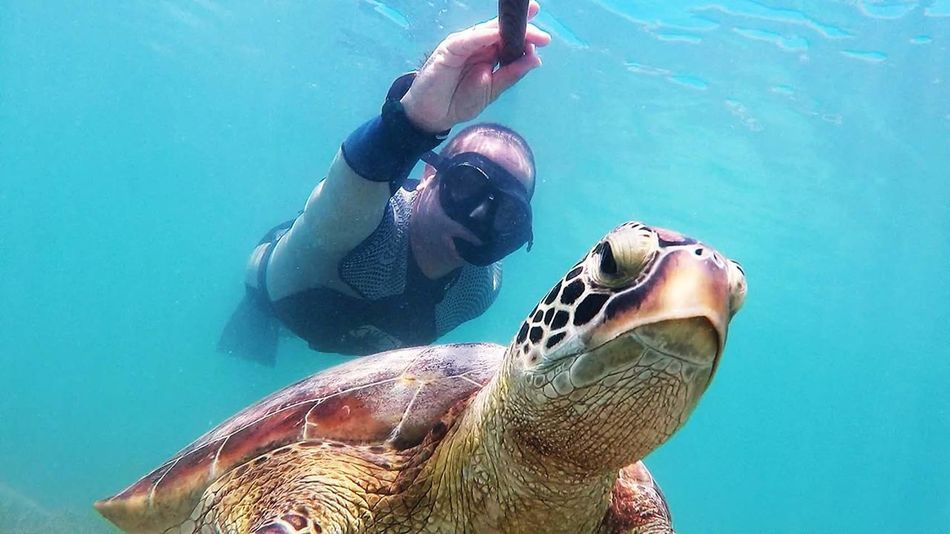 Underwater Turtle UnderSea Animal Wildlife Swimming Water One Person Sea Sea Turtle Reptile Sea Life People Adults Only Animals In The Wild Adult Nature Human Body Part Animal Themes One Man Only Day