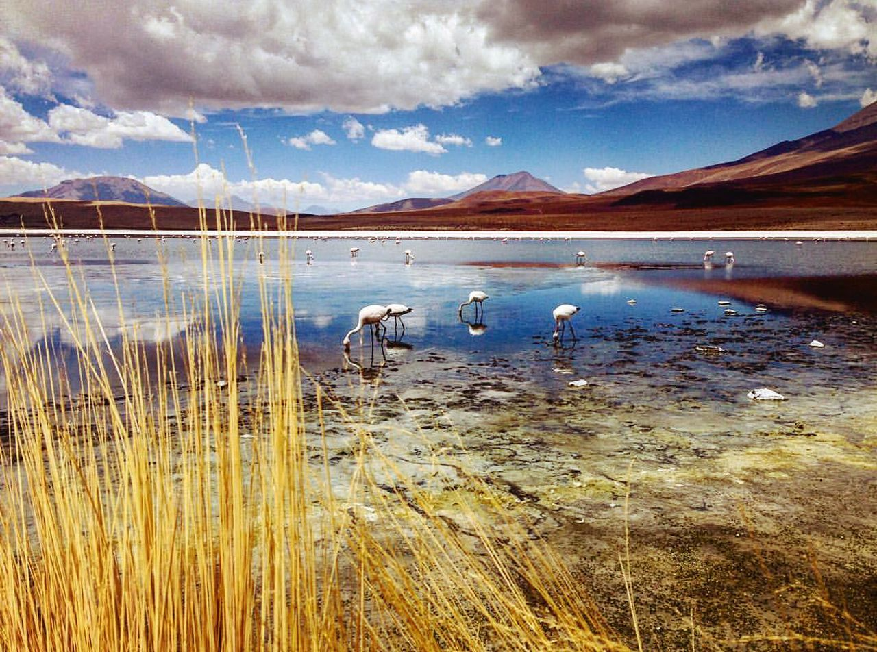 Water Beauty In Nature Sky Nature Cloud - Sky Outdoors No People Mountain Lake Landscape Day Wonderful_places Naturelovers Travel Travel Destinations Bolivia Tranquility Tranquil Scene Scenics Beauty In Nature Nature Sand Laguna Flamingos In Water