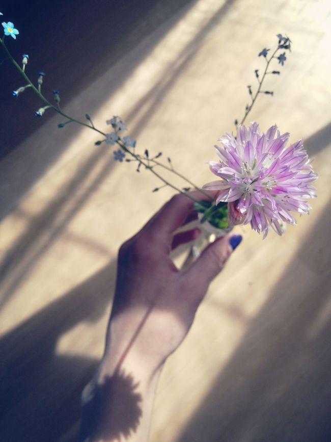 Chiveflower Forget Me Nots Bouquet Hand Lights And Shadows Still Life Garden Flowers