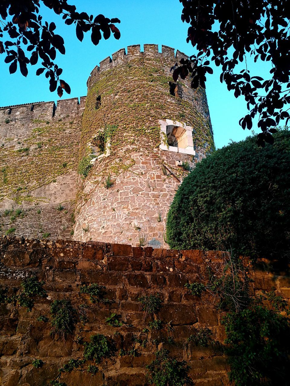 architecture, built structure, low angle view, history, building exterior, tree, the past, day, no people, ancient civilization, ancient, old ruin, castle, travel destinations, fort, outdoors, clear sky, nature, mountain, sky