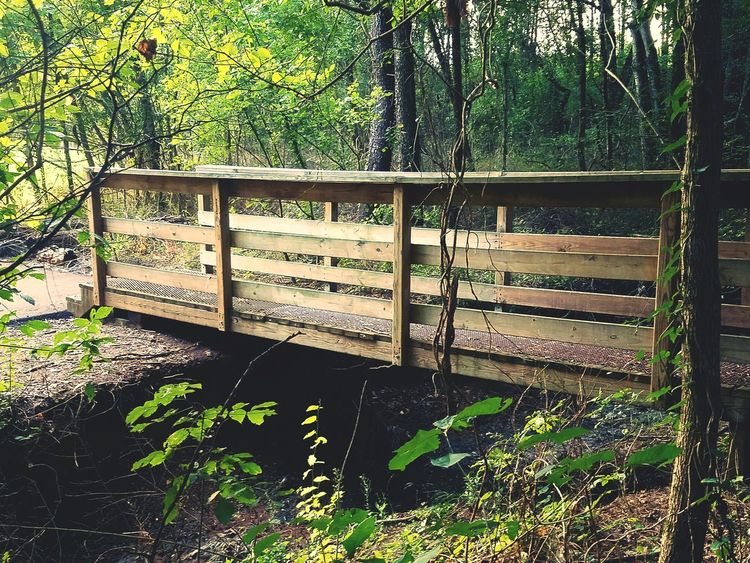 Green Trees Foliage Nature Beauty In Nature Bridge Bridge - Man Made Structure Wood - Material Wood Woods Forest Environment Sunset Evening Walking Bridge Wooden Bridge Landscape Colour Of Life Colors Tennessee Trail Magical Forest Fairy Forest Magical Trees