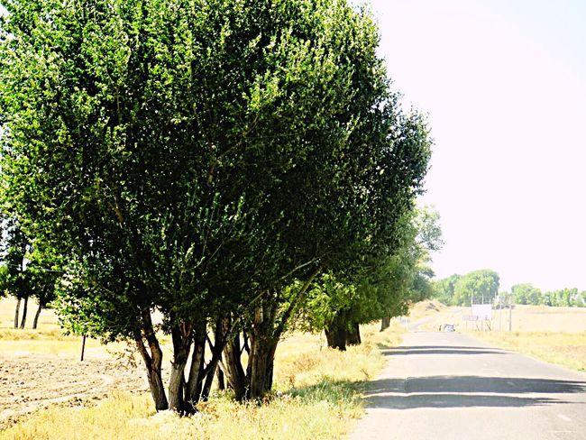 Trees And Sky Road Photography Iran Ardebil
