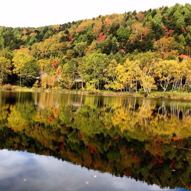 志賀高原 木戸池 鏡の様に紅葉を映し出す光景は素晴らしいです🍁 Japan Nagano-prefecture Beautiful Day Shigakogen  Lake Fall Beauty Amazing View EyeEm Nature Lover Nature Photography EyeEm Best Shots - Nature 山ノ内町