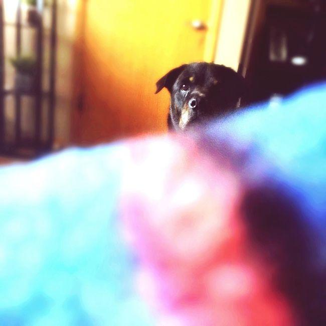 { My Lovely RottWeiler } Rottweiler Rottweiler Dogs Dog K-9 Mans Best Friend Loyalty Showcase: November Petphotography