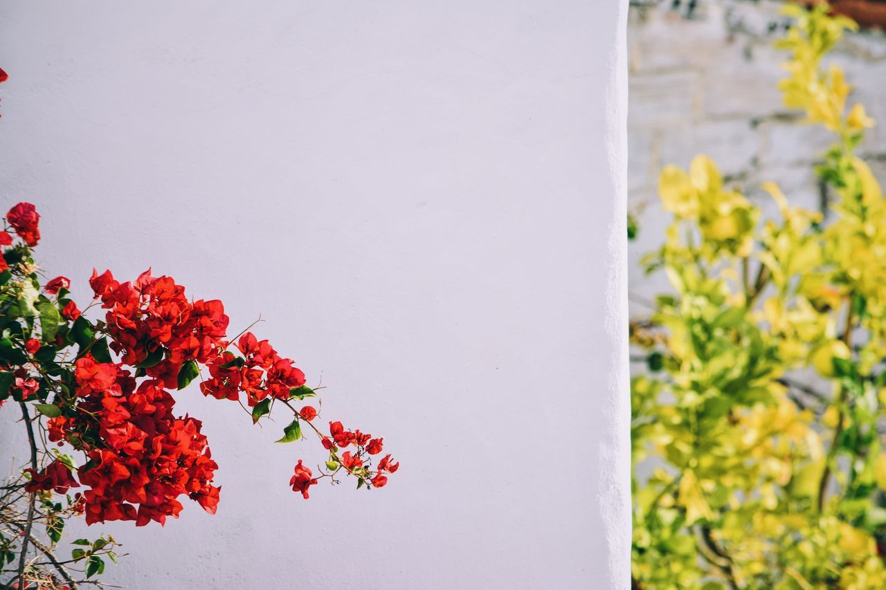 bougainvilleas Winter Blooms EyeEm Best Shots Eye4photography  Street Photography Minimalism Black And White Vs Color Walking Around Taking Pictures Walking Around VSCO Let's Do It Chic! Vscocam Nikon Colors Nikonphotographer Nikon D7200 Hello World First Eyeem Photo How's The Weather Today? Nikonphotography Respect For The Good Taste Exploring New Ground Top Popular Photo Taking Photos White Album White Background 07:02 ^