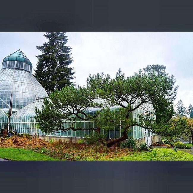 Green house Wrightpark Greenhouse Botanicalgarden Flowersnshit Washington Tacoma Photography Nikon D3200