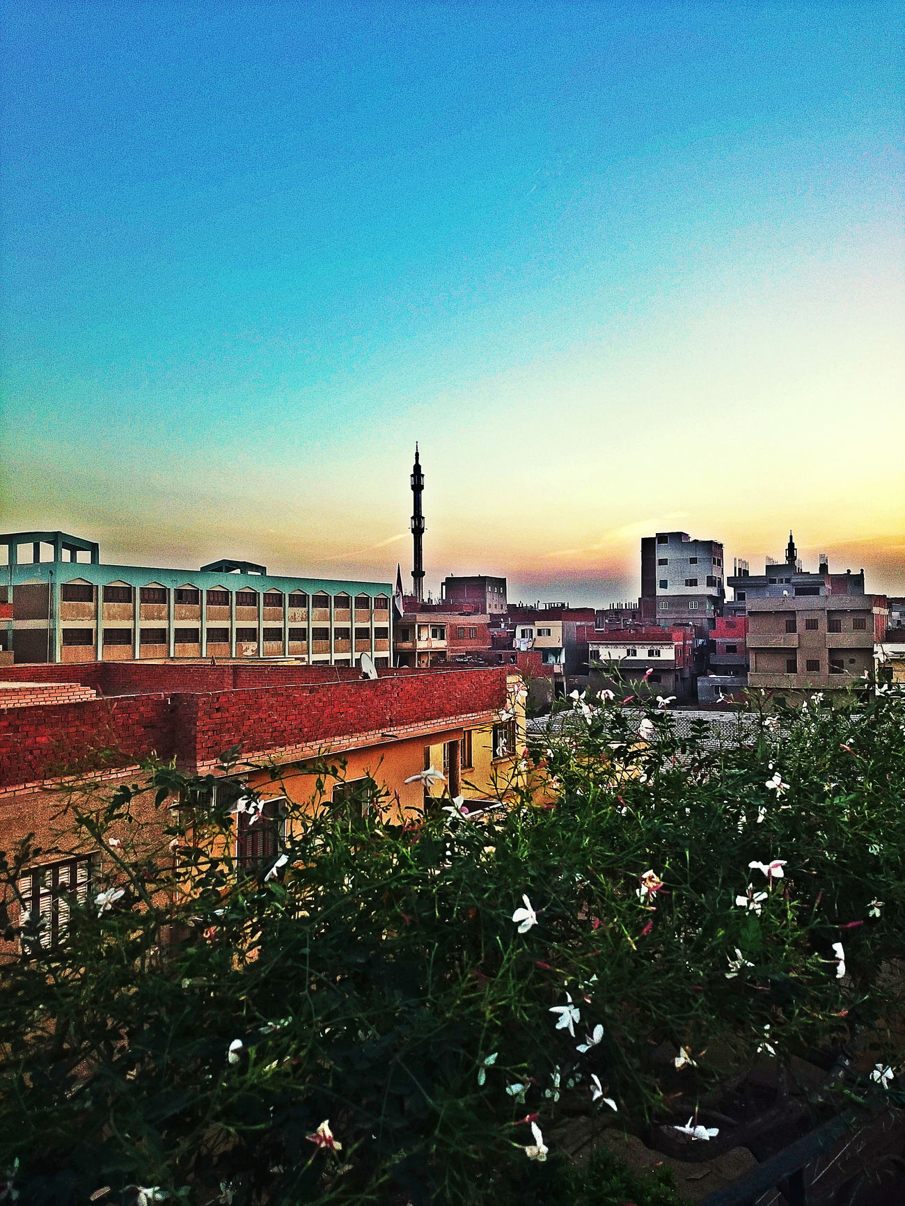 Beautiful Blue Sky Buildings Buildings And Sky Colorful Colour Colourful Sky Egypt Egyptian Flower Flowers Flowers, Nature And Beauty Green Homes Horizon Jasmine Flower Jasmine Flowers Mosque Natural Natural Beauty Nature Plant Plants Plants And Flowers Sky
