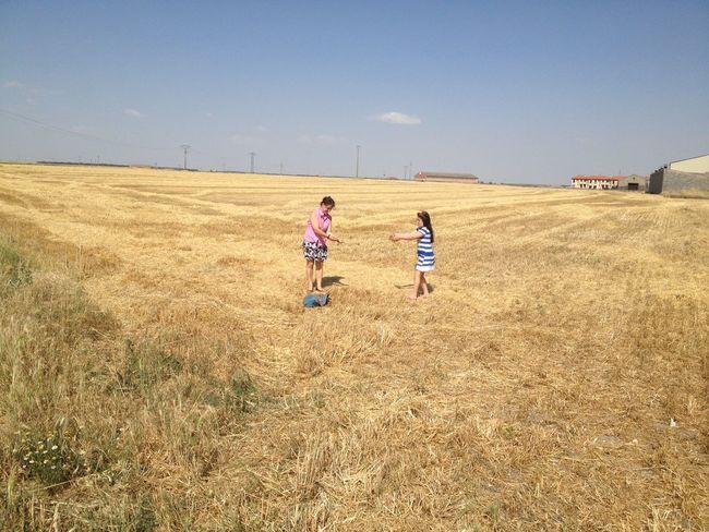 Countryside Wheat