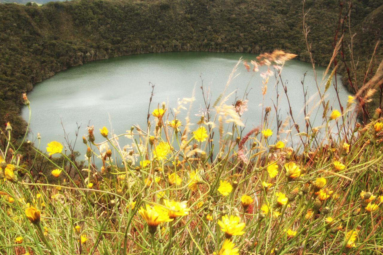 Yellow Wildflowers Blooming On Lakeshore