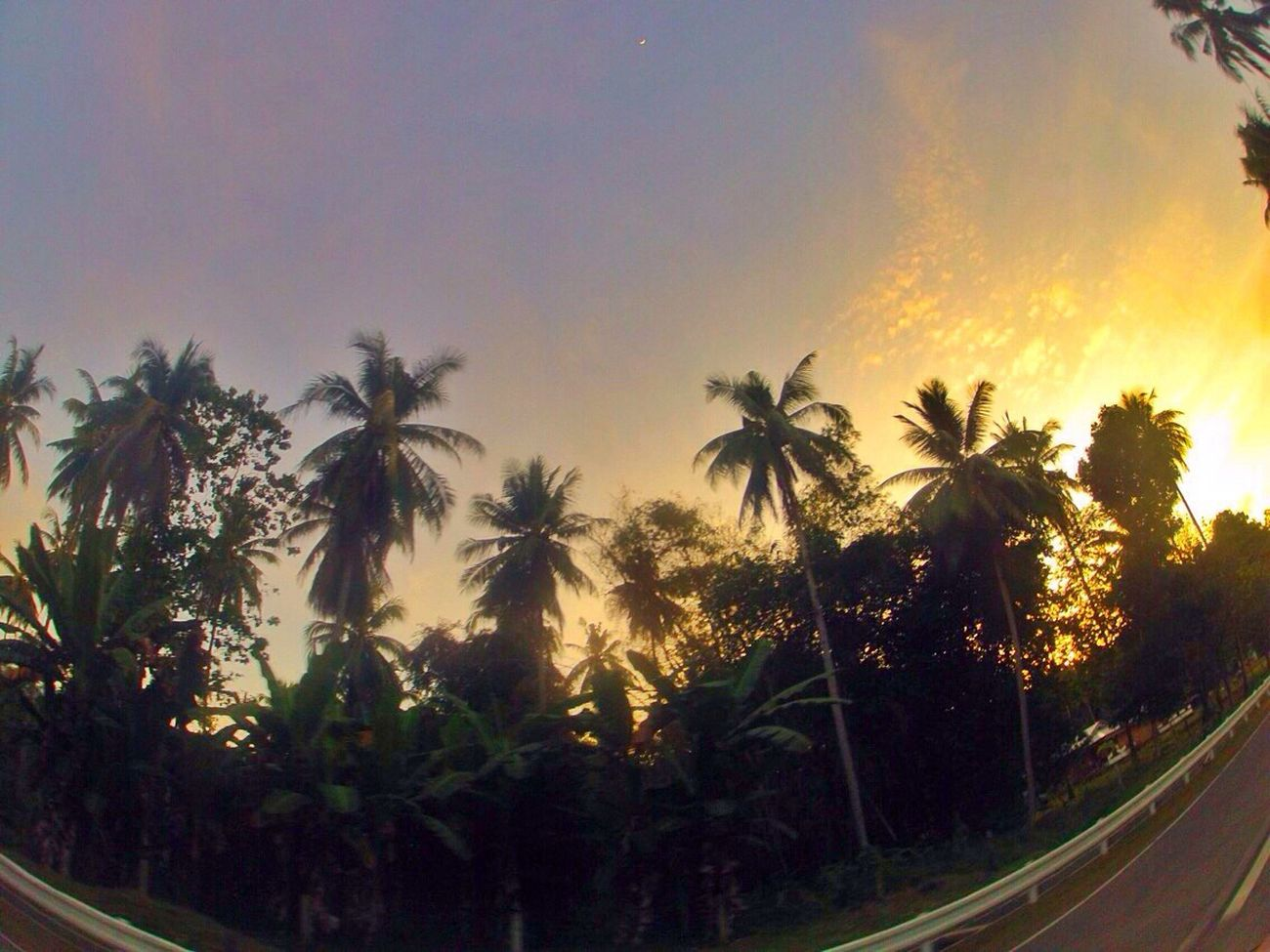 Tree of Life. Tree Growth Coconut Tree Nature Sunset Beauty In Nature Beautiful Creation