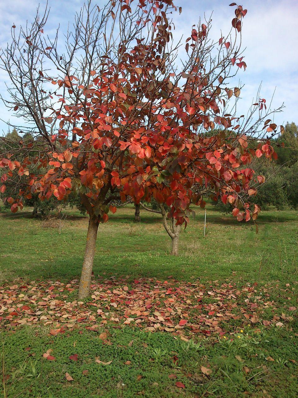 Autumn Tree On Grassy Field Against Sky