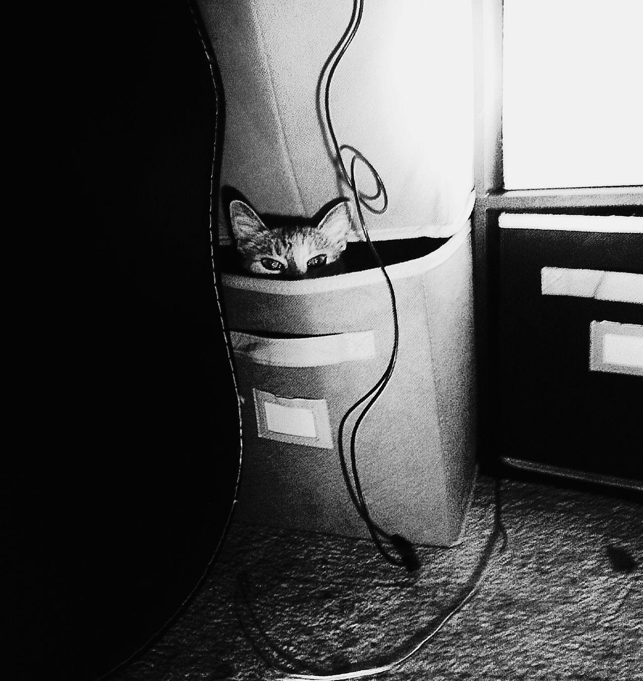 Kittygato Shygirl Yamahaguitar Whateverworks Freelance Life Gangsters Paradise Enjoying Life Picoftheday