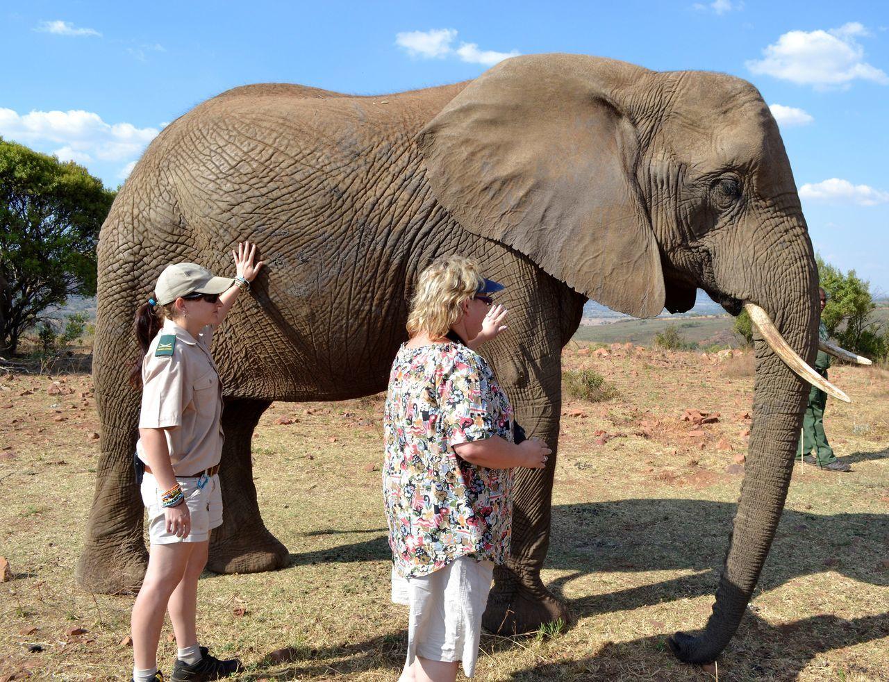 Beautiful stock photos of elefant, elephant, indian elephant, togetherness, outdoors