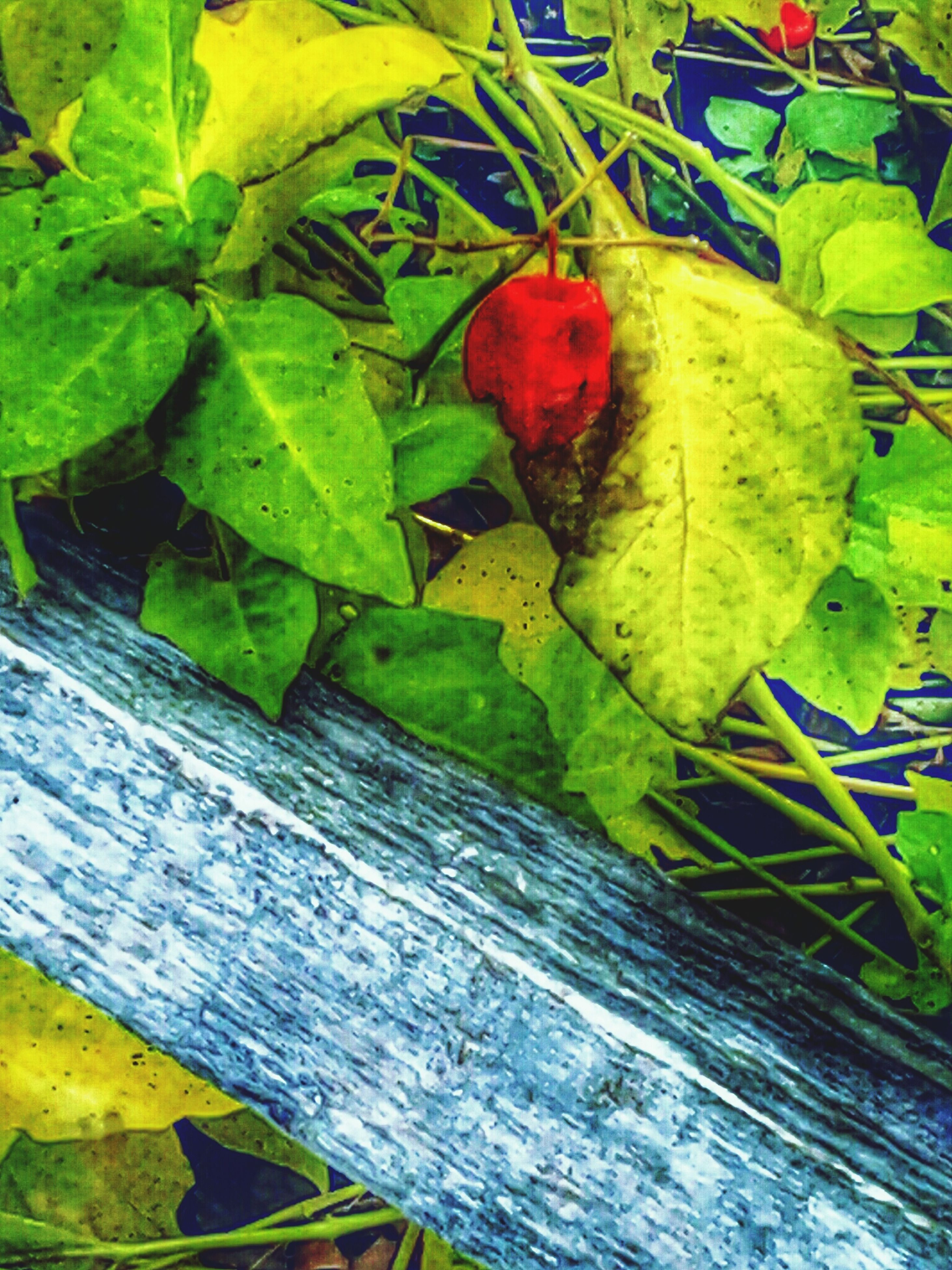 leaf, wood - material, green color, high angle view, wooden, close-up, plank, autumn, wood, leaves, no people, day, nature, outdoors, yellow, growth, green, change, multi colored, directly above