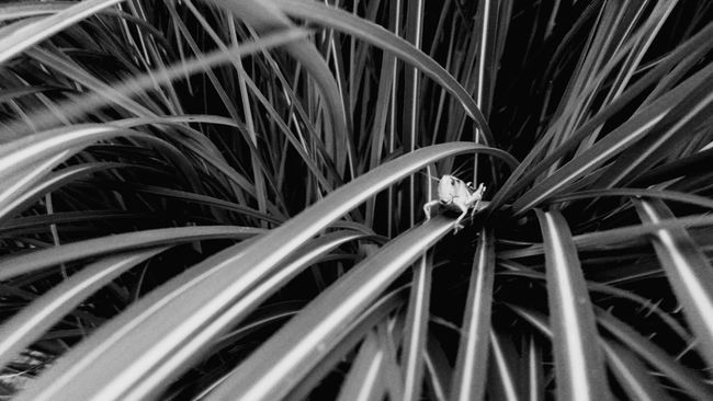 EyeEm Nature Lover Myfrontyard Nature On Your Doorstep EyeEm Best Shots Black&white Blackandwhitephotography this guy was so content here in the grass, I just had to capture his mood! Creative Light And Shadow