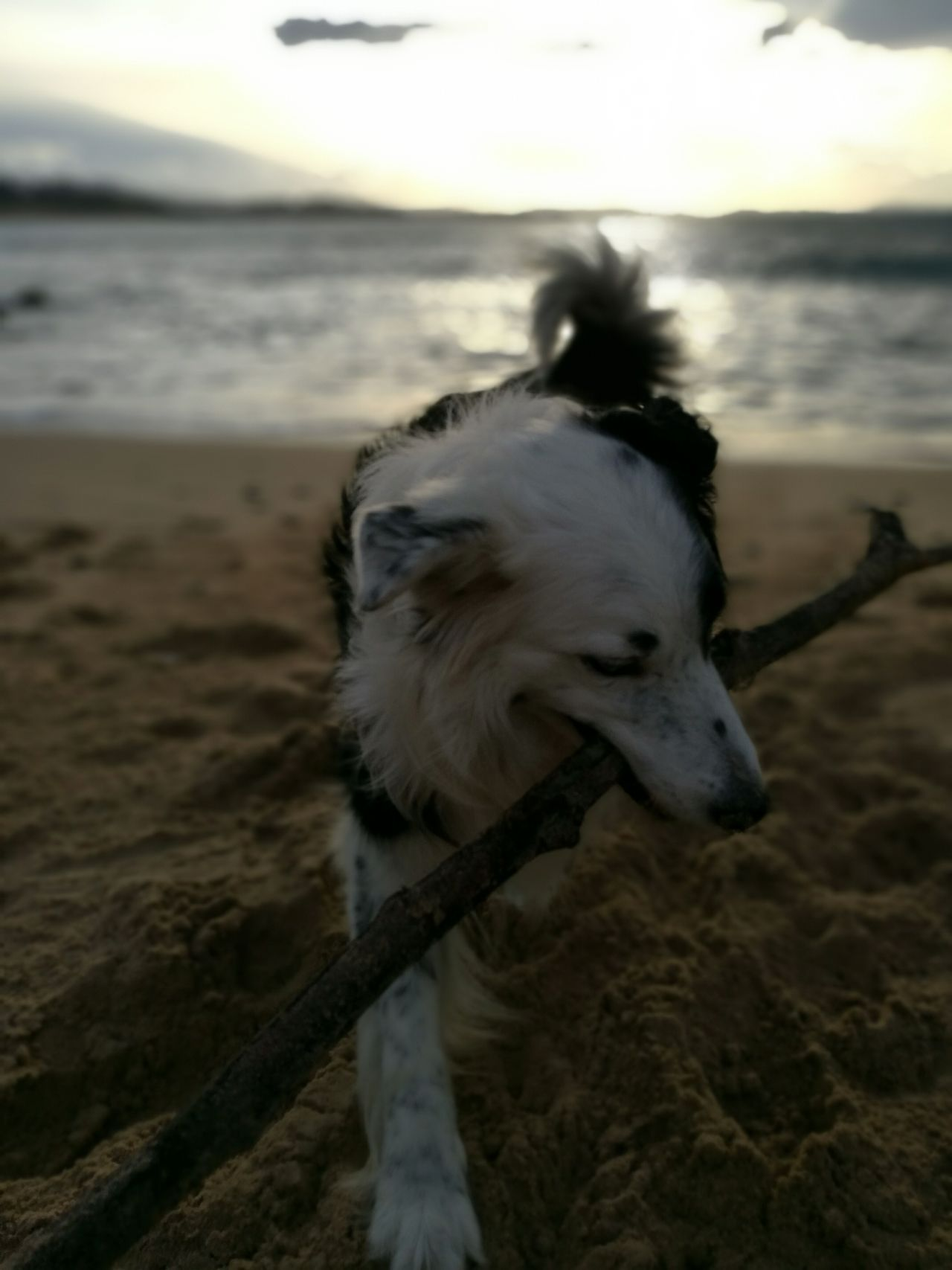Animal Themes One Animal Domestic Animals Sea Water Mammal Beach Nature Dog Outdoors No People Sunset Pets Wave Close-up Horizon Over Water Sky Day EyeEm Gallery Nofilter NoEdits  EyeEm Best Shots