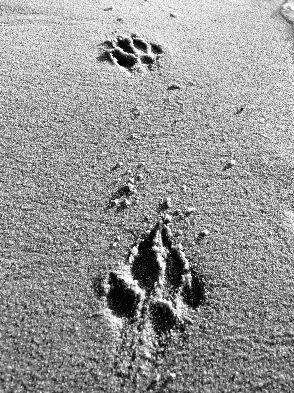 - Paws - Paw Paw Print Outdoors Blackandwhite Black & White Animal Photography Black And White Photography Animal Love Dog Dogs Dogslife Impronte Imprint Sand Canon IPhoneography Canon 70d Black And White Contrast