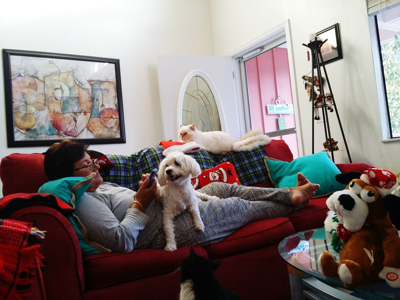 dog, indoors, pets, real people, togetherness, sofa, domestic animals, lifestyles, mammal, home interior, leisure activity, sitting, women, day