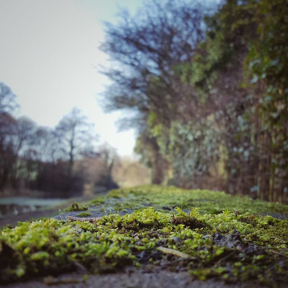 Nature Beauty In Nature Selective Focus Moss Green Color Outdoors Landscape Flower Outdoor Photography Countryside Naturelovers The Great Outdoors Wales Landscapes Wanderlust TheGreatOutdoors Nature_collection Nature Photography Forest Nature Beauty