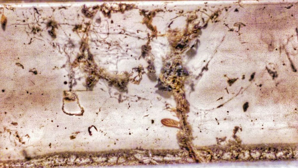 Your Weekly Web Report Arachnipocalypse The Impurist Edit Junkie Webporn Dead Things Dirty Thoughts The Leftovers Arachni-therapy
