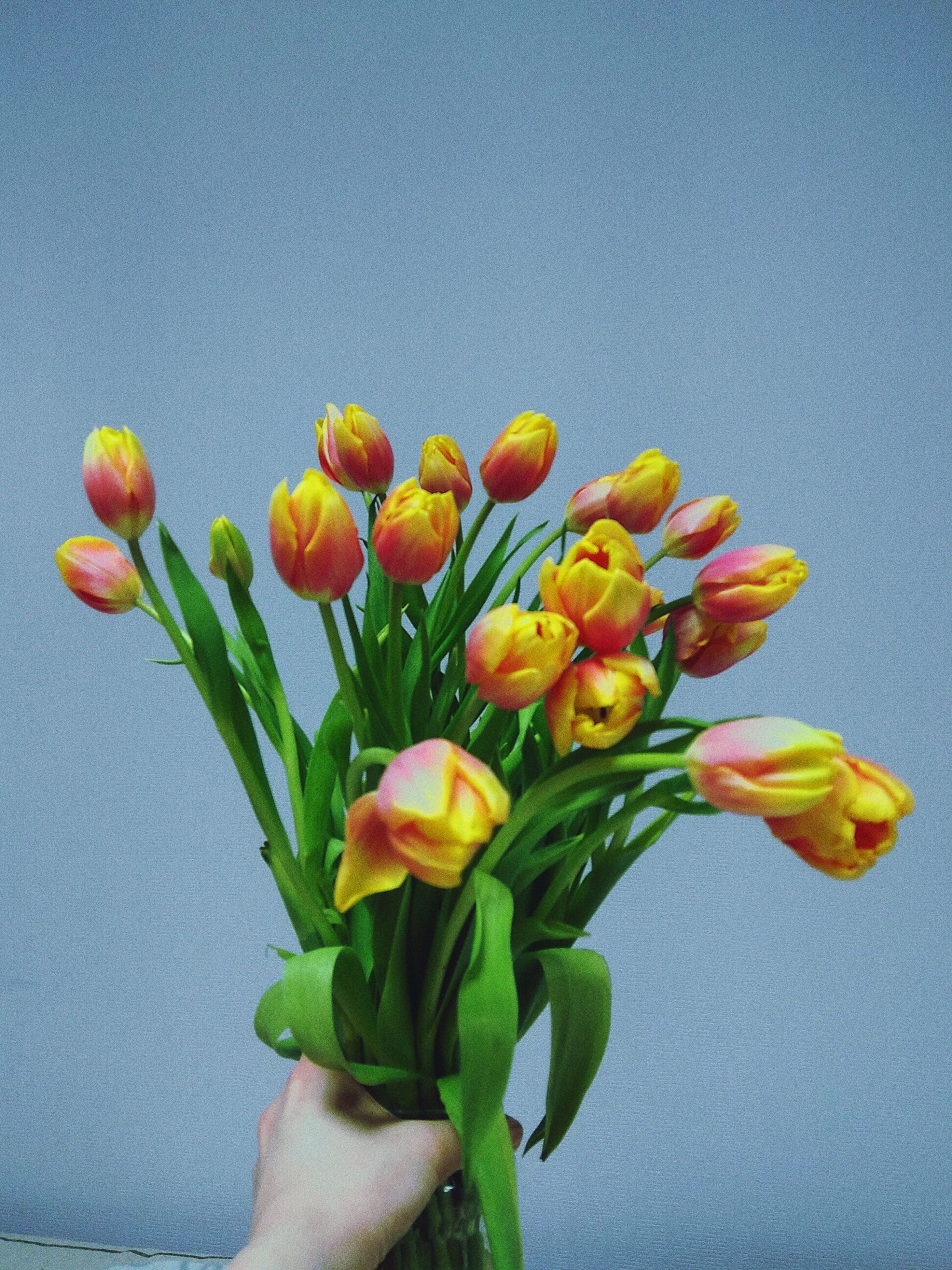 flower, freshness, beauty in nature, fragility, nature, close-up, plant, tulip, petal, growth, day, no people, flower head, outdoors