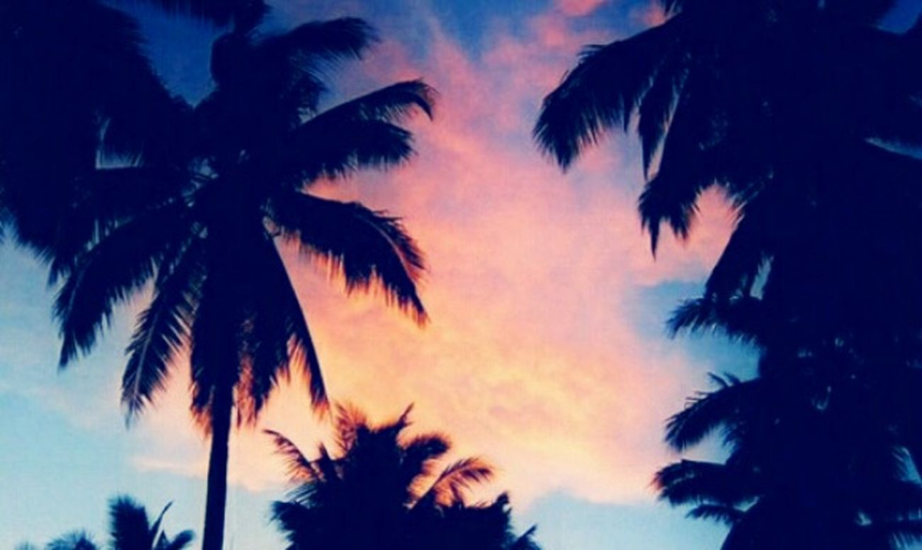 Why I Love Florida Sunset_collection Palm Trees West Palm Beach