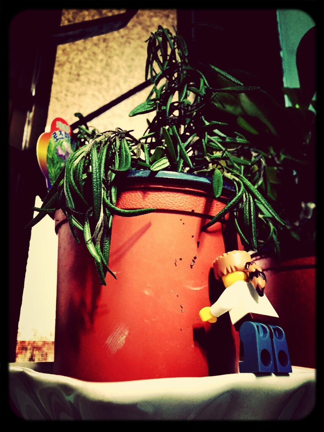 Lego Minifigures LEGO Plants Plants 🌱 Fatigue  Iphone6 Taking Photos Seoul, Korea Seoul Taking Photos