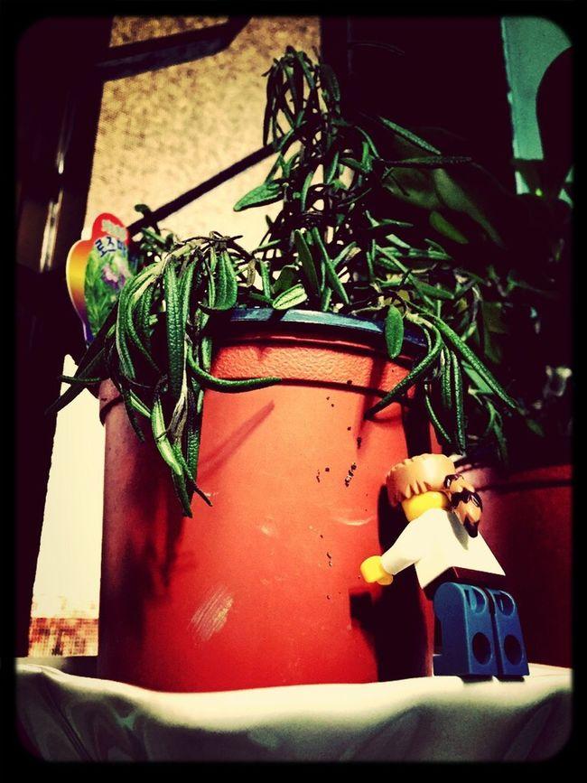 Lego Minifigures LEGO Plants Plants 🌱 Fatigue  Iphone6 Taking Photos Seoul, Korea Seoul Taking Photos