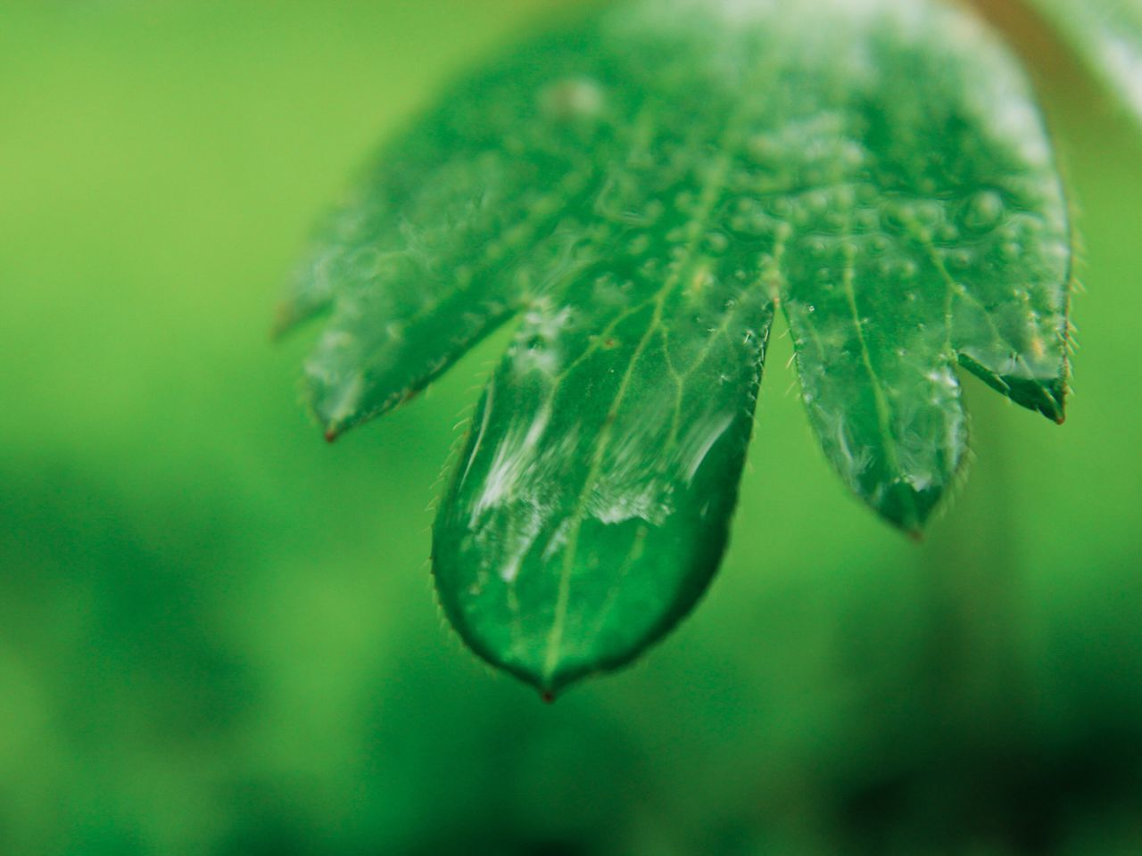 Rain Drop. 💧 Leaf Drop Nature Green Color Close-up Focus On Foreground Beauty In Nature Water Rain Drop Rain Drops On Leaves Macro Plant Tiny Nature Freshness Outdoors Cold Temperature