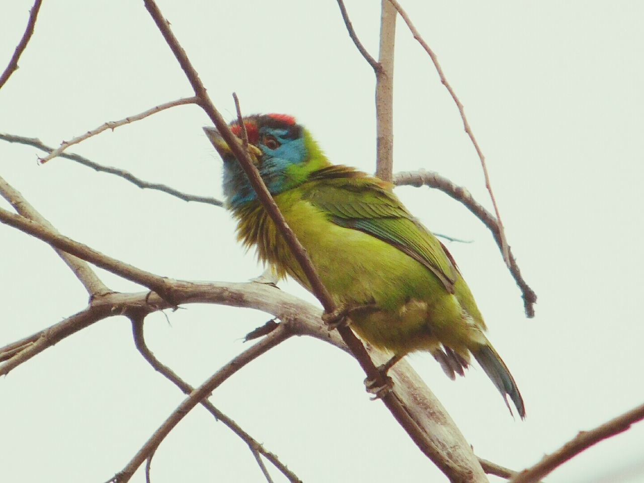 Green Bird Little Bird Nature_collection Winter Bird View Cute Bird