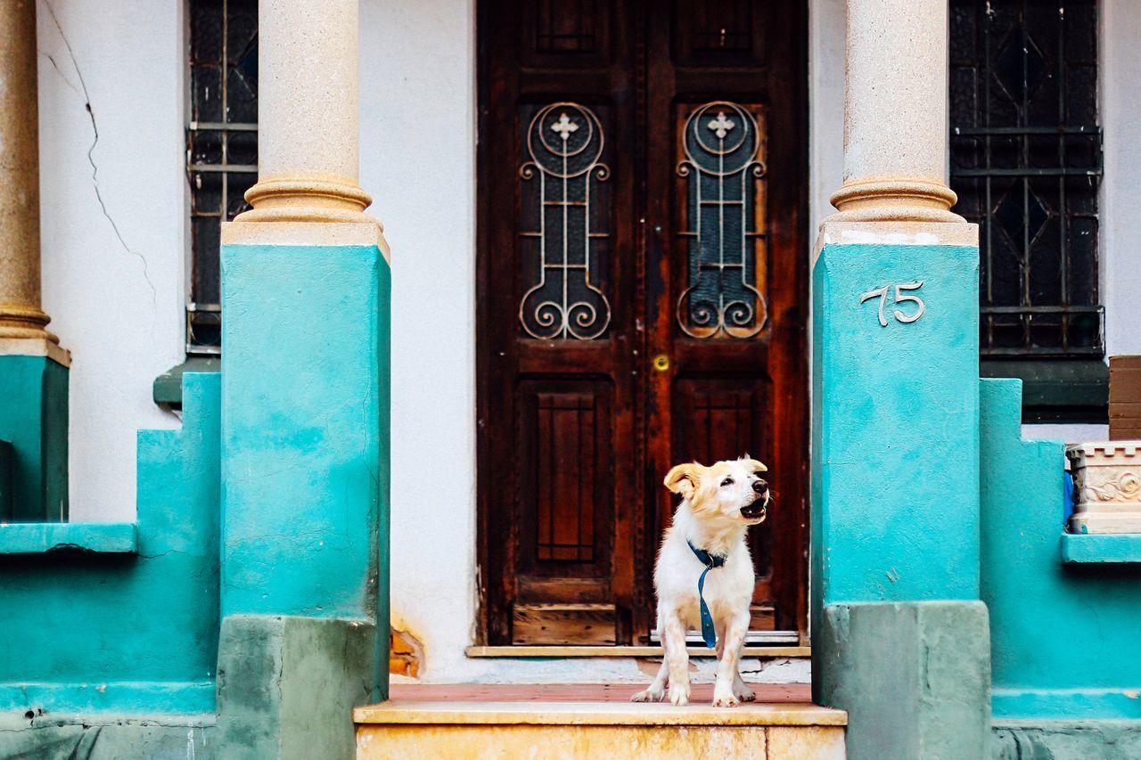 Beautiful stock photos of brazil, Alertness, Animal Behavior, Animal Themes, Architecture