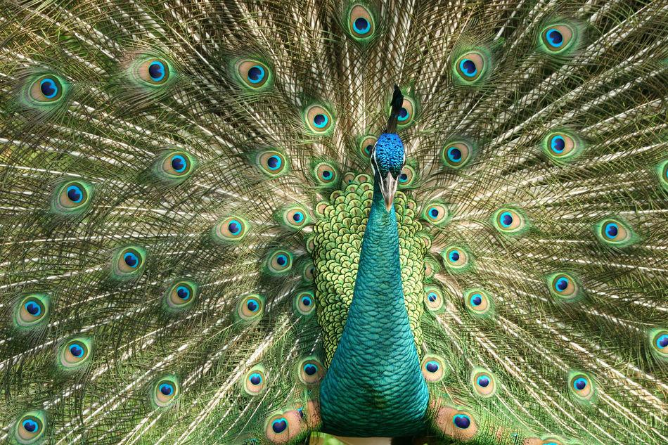 Beautiful stock photos of augen, Animal, Animal Behavior, Animal Body Part, Animal Head