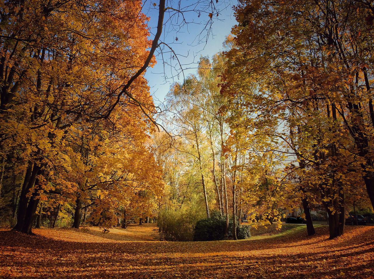 Herbst Herbst In Seinen Schönsten Farben Herbst, Laub, Herbstlaub, Herbstfarben, Herbstleuchten, Herbstspaziergang, Herbstlaub Herbstmelancholie Herbstsonne Herbststimmung Spaziergang Durch Den Herbst.