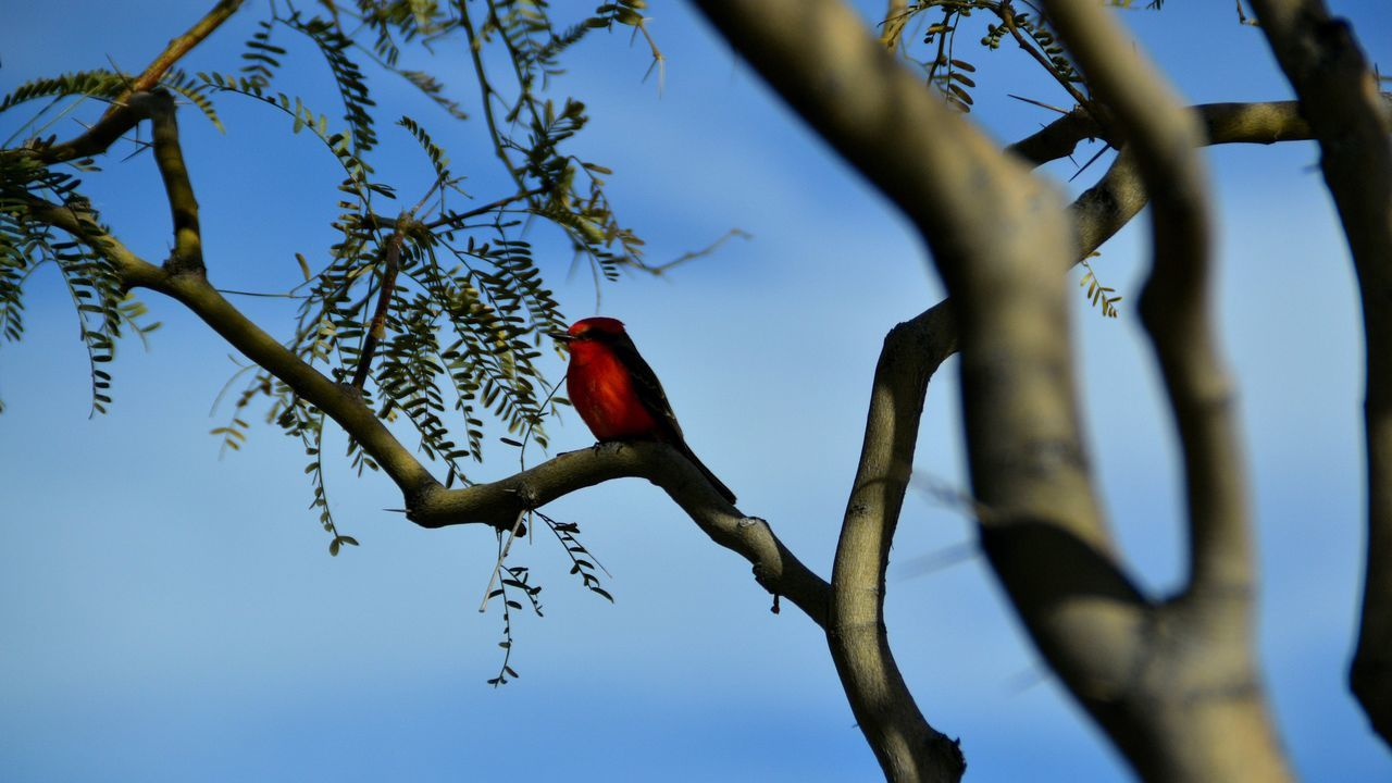 Low Angle View Of Red Bird Perching On Branch