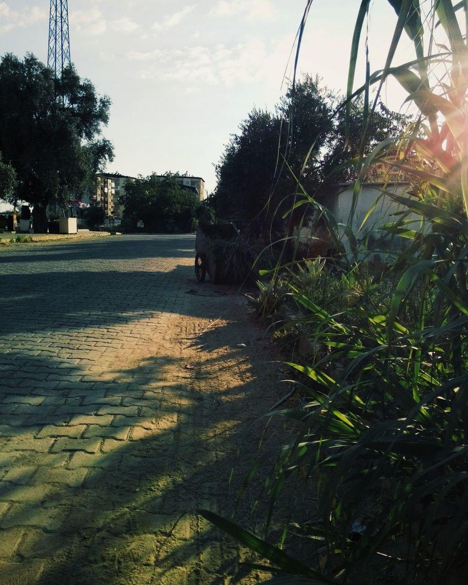 Nazlı ili köy değil iddiasına tekzip niteliğinde. Ama güneşli. Ama sevimli. Ama yeşilli. Greens Sun Sunshine Tranquility Road & Nature Yaşasın Yeşillik !!!